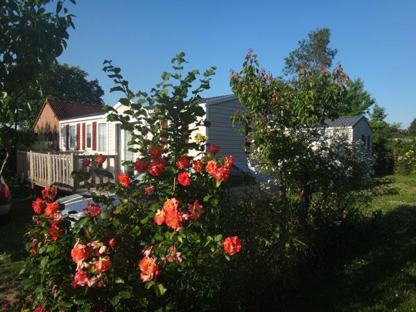 Les fleurs du camping